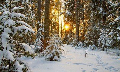 Неизвестные обманули волонтеров сообщением о пропавшем в лесу ребенке