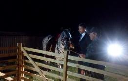 Только мы с конем: сакральный смысл стычки врио Осипова с жеребцом Соохор