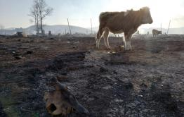 В погоревшее село Шара привезут сено для скота
