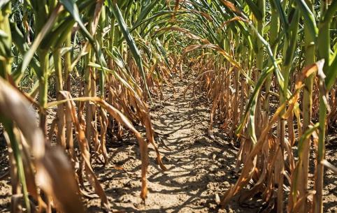 Режим ЧС из-за засухи готовятся ввести в «житнице Забайкалья»
