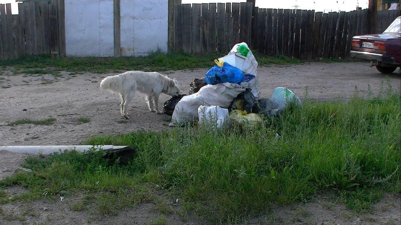 «Олерон» — мусорный генератор