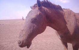 «Вечорка» №17 — Все сгорело: люди, кони — репортажи с пожаров в Забайкалье в свежем номере