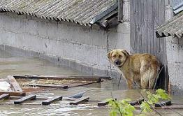 Пострадавшие от затопления жители Нер-Заводского района не могут получить компенсацию