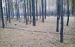Нер-Заводский район: Молодого человека осудили за ошибку лесничих?