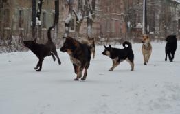 Жителей Борзи атакуют стаи бродячих псов