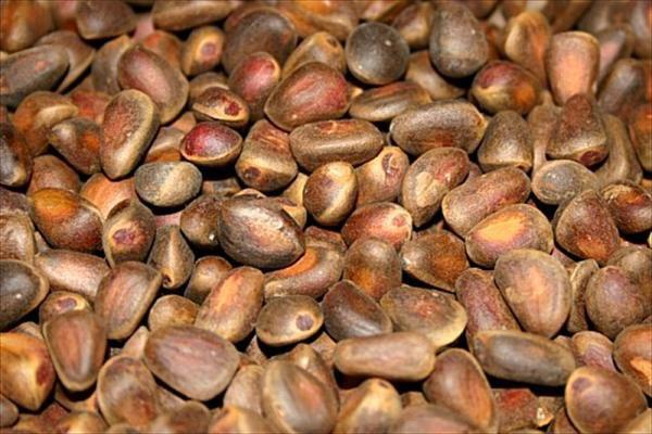 В Красночикойском районе цена на орех упала до рекордно низкого уровня