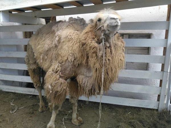 Докажи всем, что ты не верблюд. Ответ на злостные комментарии ...   450x600