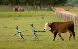 В Балейском районе полицейские задержали скотокрадов с мясом похищенной и разделанной коровы