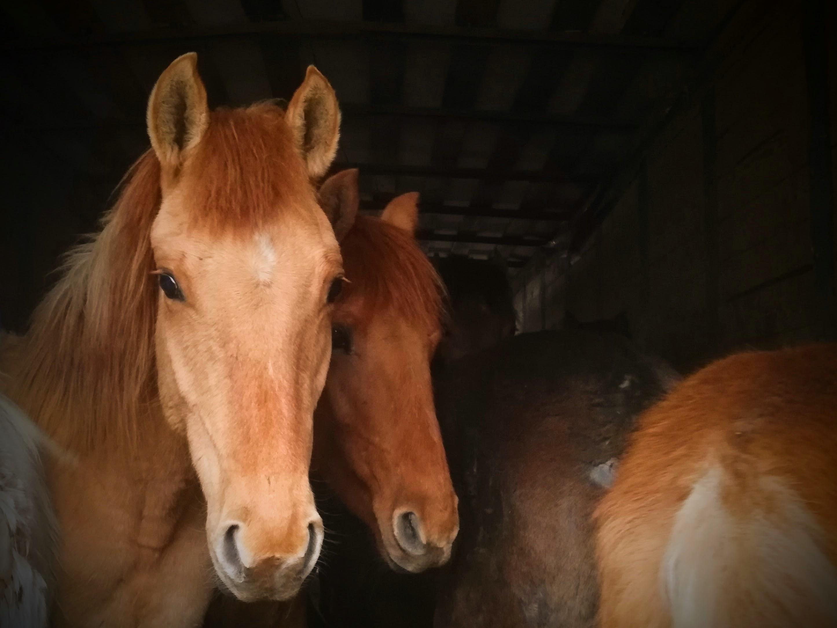 Эх, три мертвых коня! (ВИДЕО)
