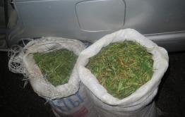 10 килограммов конопли изъяли у жителя Петровск-Забайкальского