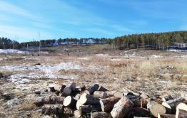 Директор тунгокоченского лесничества вырубила леса на 10 млн. р.