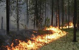 В Забайкалье увеличат штрафы за нарушение правил пребывания в лесах