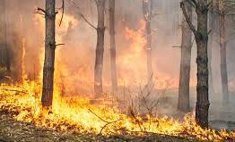 В Забайкалье в семь раз увеличилась площадь лесных пожаров