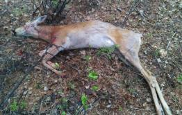 Прокуратура Борзинского района «волокитит» уголовное дело в отношении браконьеров с ППГХО