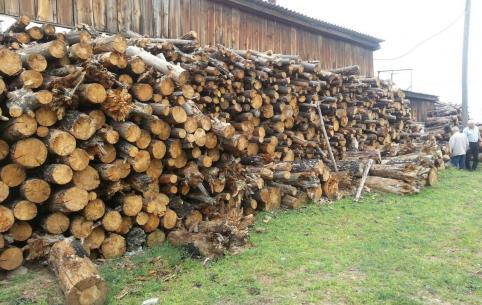 Дрова для котельных закончились в Нижнем Цасучее из-за вырубки горельника на месте соснового бора