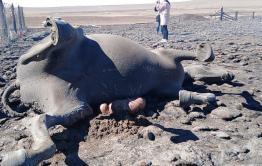 В Забайкалье в огне пожаров погибло почти 12 тысяч голов скота