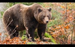Забежавшего в Песчанку медведя застрелили