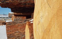 Полиция с поличным задержала под Читой черных лесорубов, напиливших леса почти на миллион рублей