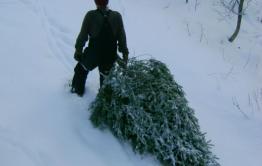 Заключенных из колонии в Тыргетуе отправляют в лес воровать елки — из письма в «Вечорку»