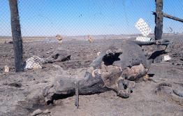 Очередная стоянка сгорела в Забайкалье