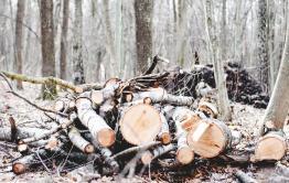 Забайкалец незаконно спилил 94 дерева и продал на дрова