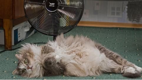 В Читу пришло лето: до 30 градусов тепла ожидается в выходные дни