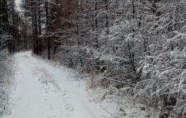 Ветер, снег и понижение температуры – сегодня в Забайкалье