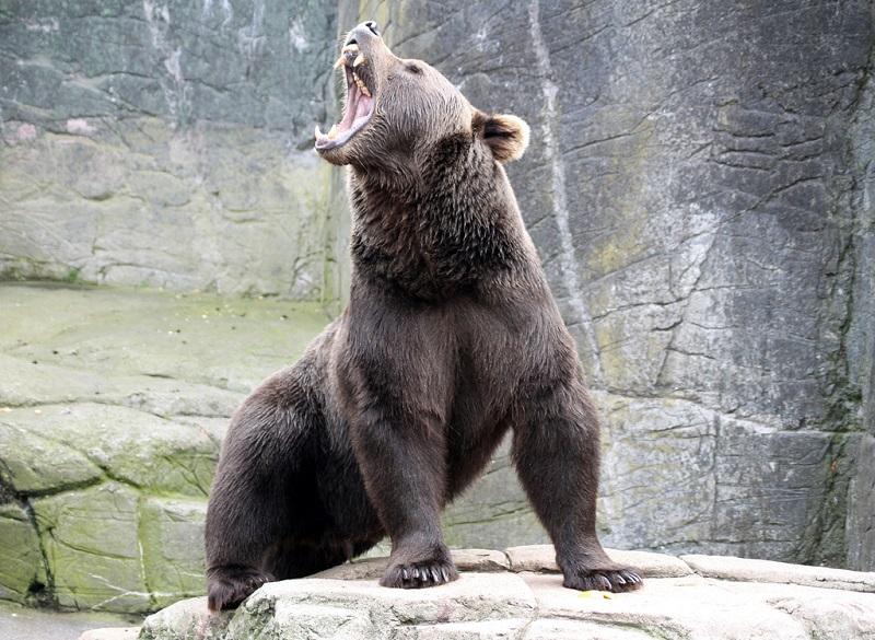 В Хилокском районе медведь разорвал женщину