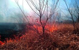Лесной пожар действует около Карымского