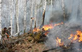 Забайкалье вошло в пятерку регионов с самой большой площадью лесных пожаров