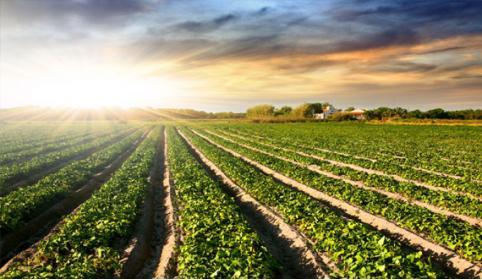В шести районах Забайкалья ввели режим ЧС из-за гибели урожая