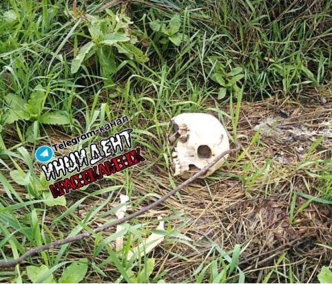 Череп с костями нашли в Краснокаменске. Останки могут принадлежать пропавшему в июле мужчине.