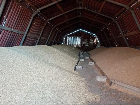 Забайкальский фермер планирует экспортировать зерно в Китай