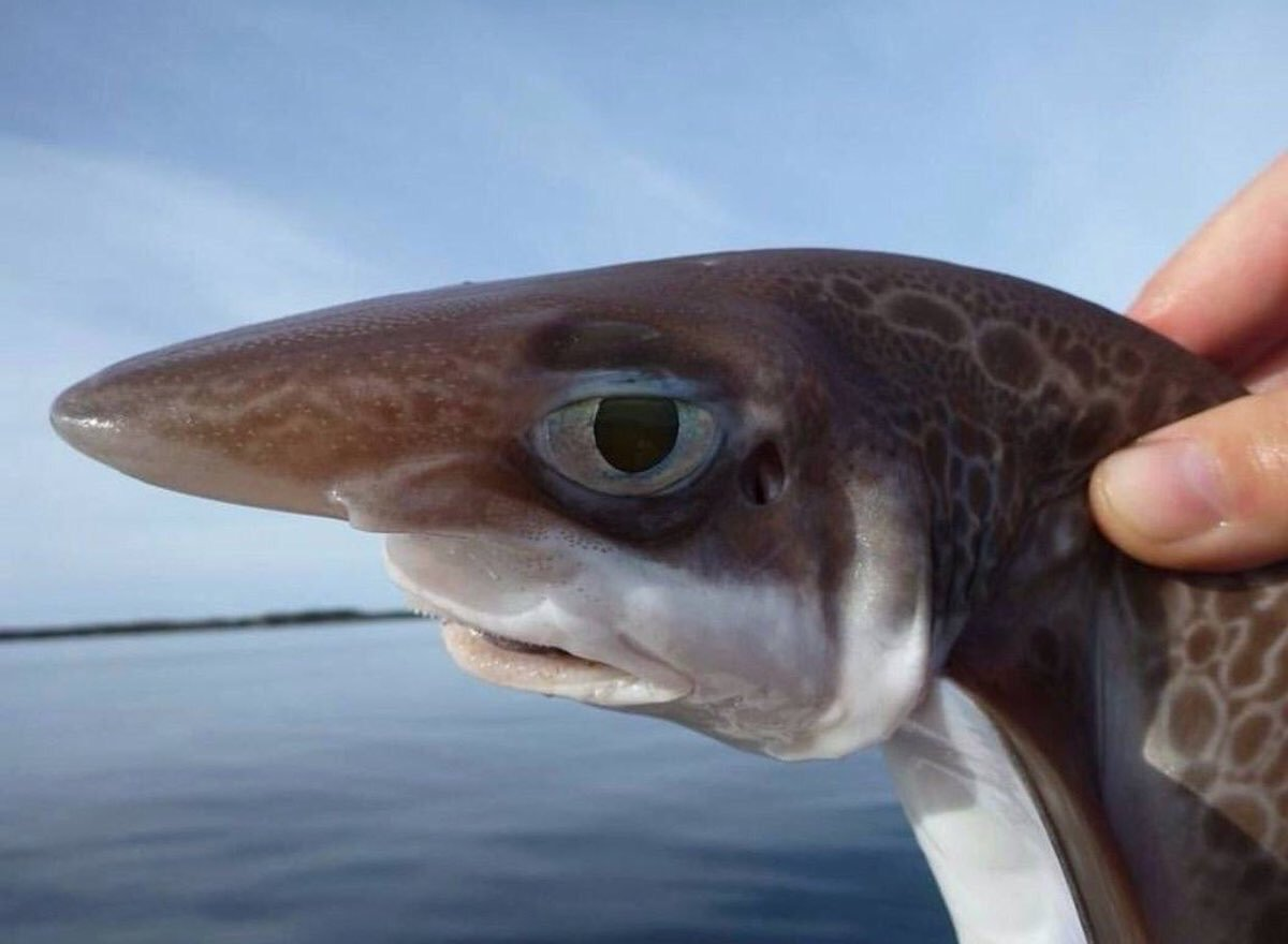 Картинки прикольные про рыбу