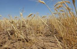 Три района Забайкалья ввели режим ЧС из-за засухи