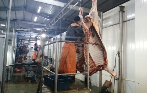 Падеж Забайкалья: ящурная резервация выгодна черным перекупщикам – животноводы