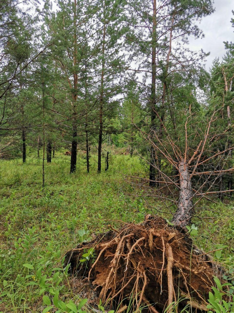 Последствия ночного шторма. Район Смоленки, недалеко от дачного кооператива. 23 июля
