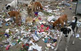 Отсутствие лавочек, собаки и открытые колодцы – этим недовольны жители Атамановки