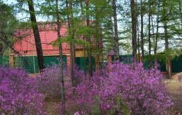 Жители Карповки-7 против выделения участков под ДВ гектар в Сосновом Бору