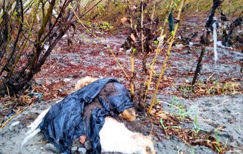 В селе Смоленка жестоко ликвидировали бродячих собак