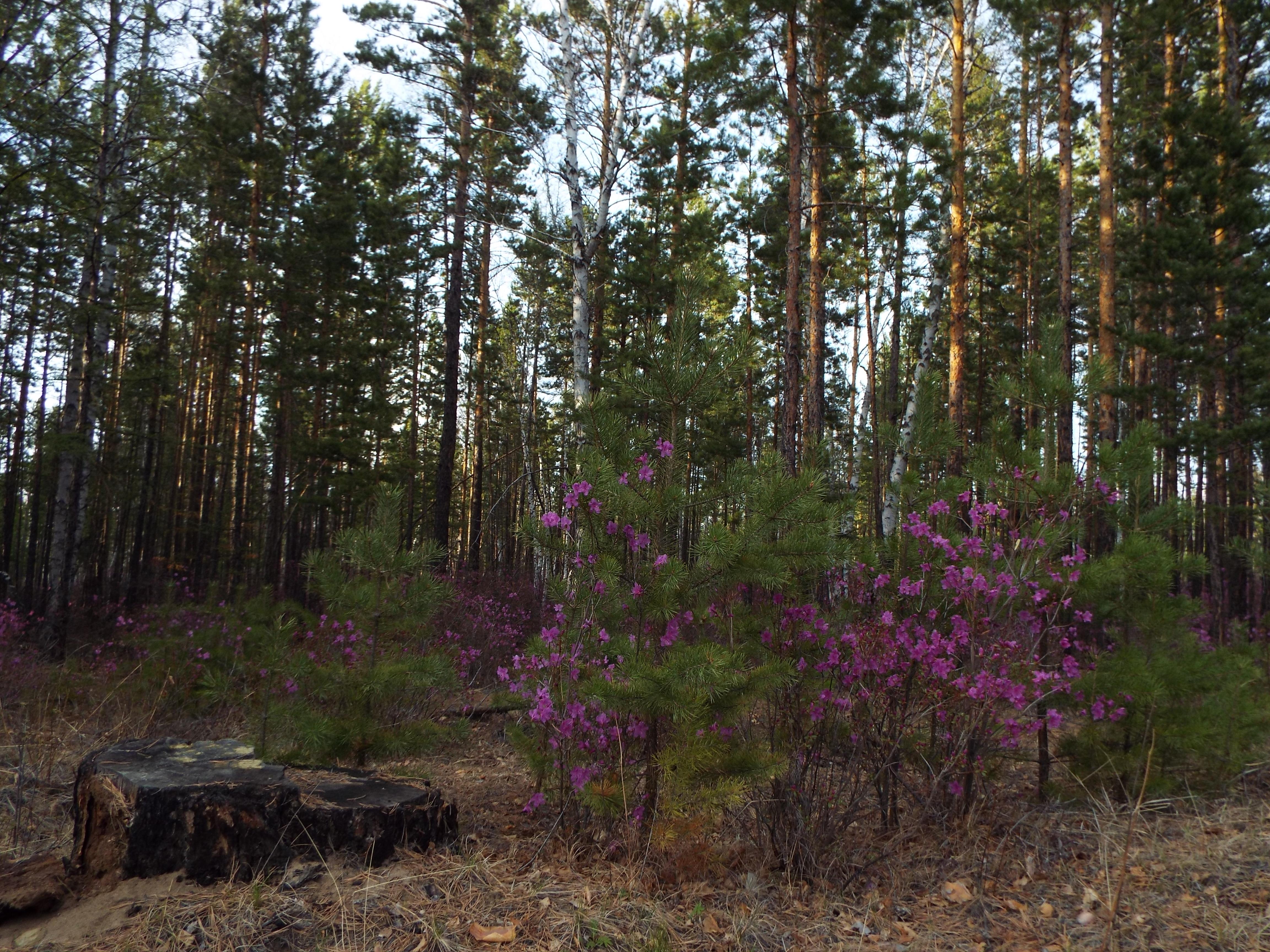 Жители Верх-Усуглей боятся замёрзнуть без дров из-за работы лесничества