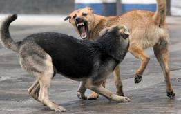 Бездомная собака напала на 4-летнего ребенка в Забайкалье. Следователи проводят проверку.