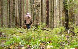 Ушел в лес и не вернулся читинский дачник