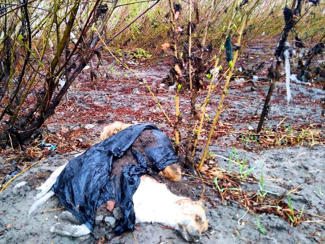 Кладбище собак нашла «Вечорка» на Читинке