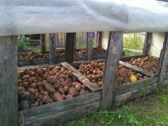 Губера избрали, картошка уродилась. А значит — будем жить! Атамановка, 14 сентября