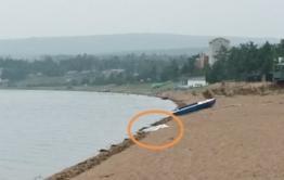 Труп неизвестного нашли на Арахлее около места, где хотели взорвать Осину