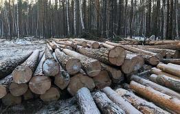 Предприниматель незаконно нарубил лес на 4,3 млн рублей в Красночикойском районе