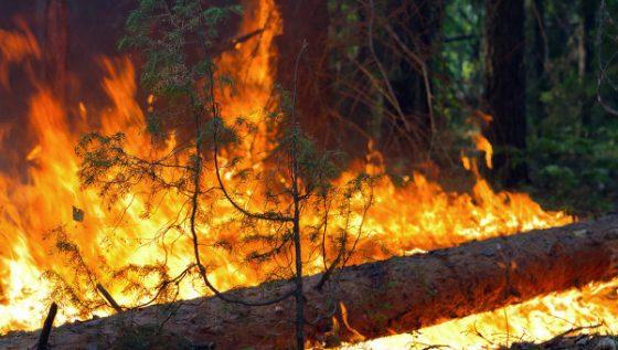 Прокуратура выявила следы поджога в лесу Чернышевского района и заставила искать поджигателей