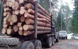 Состояние лесов в России будут мониторить из космоса