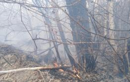 Пожар в Карымском районе грозит уничтожить березовую рощу